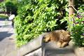 「病院坂」で昼寝する猫