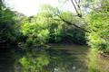 新緑の三四郎池